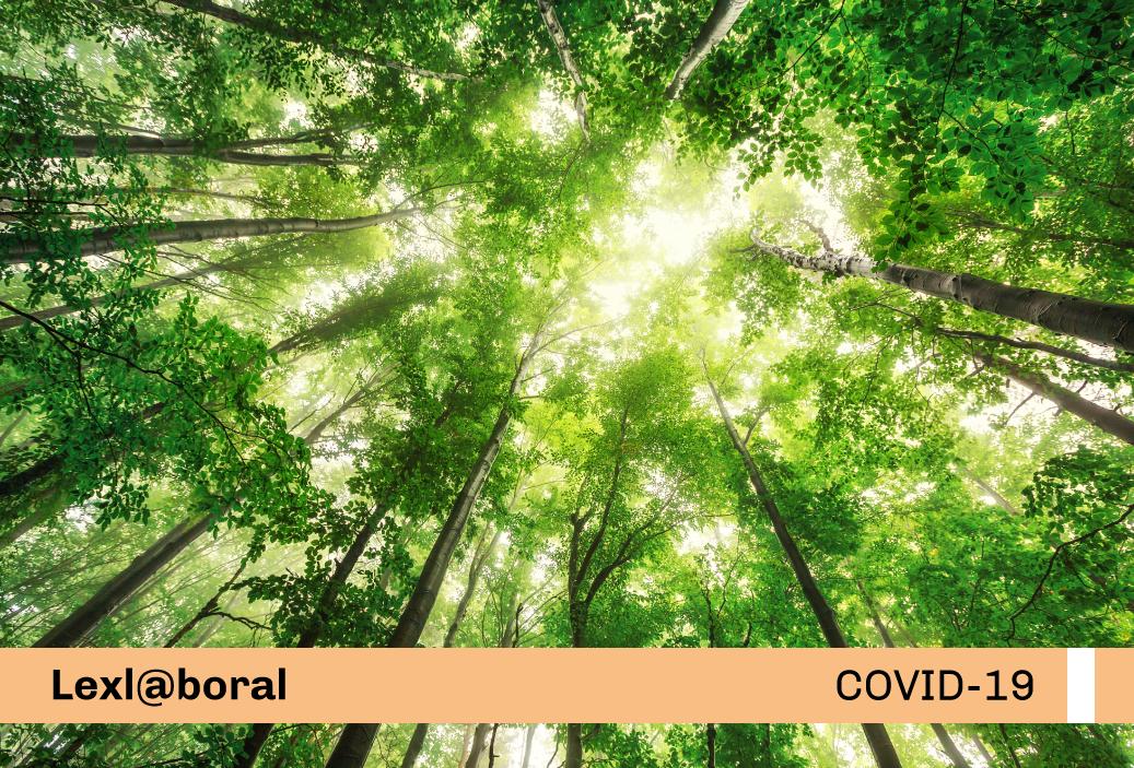 Protocolo Sanitario Sectorial en la actividad forestal