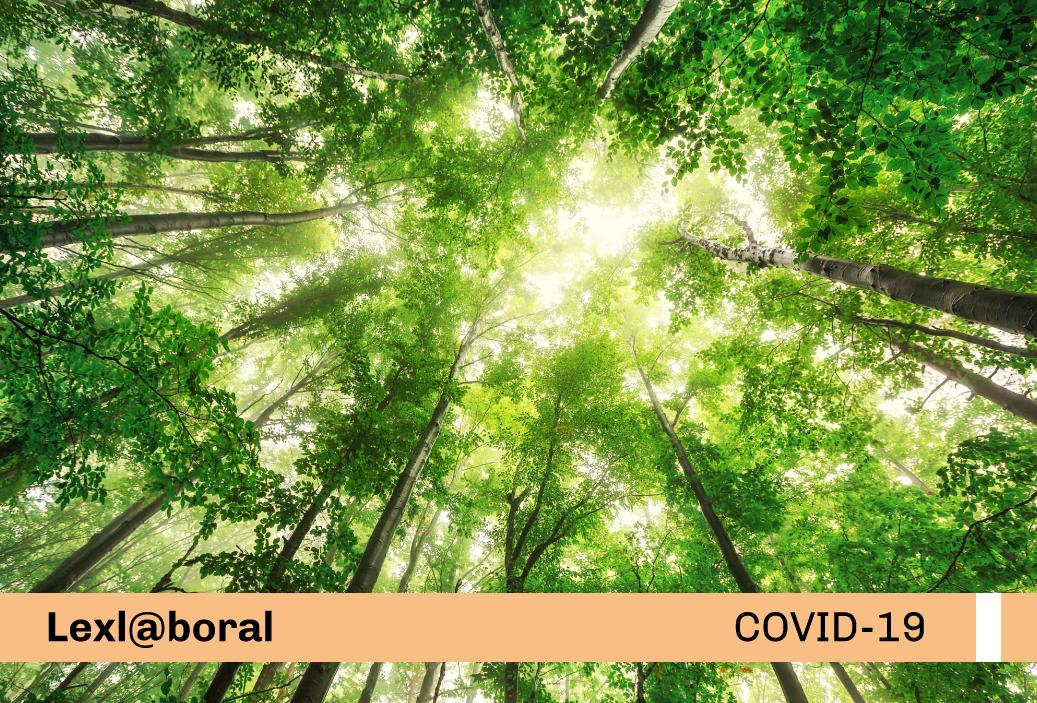 Nuevo Protocolo Sanitario Sectorial en la Actividad Forestal