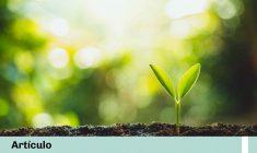 Jimena De Las Casas escribió un artículo para el Portal Conexión Ambiental: ¿Medidas correctivas o incumplimientos perpetuos?