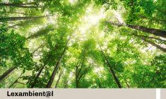 Se aprueba Reglamento de Infracciones y Sanciones en Materia Forestal y de Fauna Silvestre
